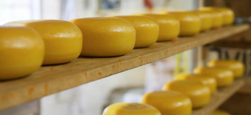 Clearfleau to harness the gas power of 4000 homes from cheese